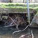 Auch die Brücke hat der Biber mühevoll zugestopft :-)