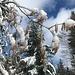 Frühlingsboten - winterlich verziert 1