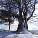 ... und gewaltigem Einzelbaum