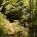 Im dichten Wald geht es hinauf zum Prodelkamm.