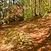 Der Abstiegsweg leitet vorbei an einem großen Nagelfluhfelsen.