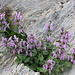 ornamento naturale nella roccia a Q. 2100