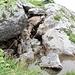 A monte il fiume Pesio prende forma