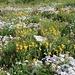 ... pochi metri quadrati possono dare l'idea del paradiso floreale??