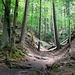 Unterwegs zur Gallengrotte,<br />Am Ende dieser Klinge befindet sich die Grotte