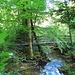 Ein schöner abwechselungsreicher Wanderweg führt durchs Strümpfelbachtal
