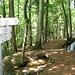 Hier quert der Weg das Hochsaler Wuhr. Die Hotzenwälder Wuhre sind künstlich angelegte Wasserläufe aus dem Mittelalter