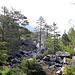Forêt aux bords de la Lizerne.
