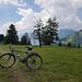 Singletrail zur Alp Castilun