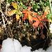 Herbstfarben auf Schnee