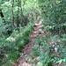 Sempre meno percorso, il sentiero che corre sotto il ripetitore di Pian Valdes si sta rapidamente chiudendo.