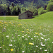 Magerwiesen bei Vättis