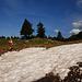 Nordseitige Schneereste so auf 1700 m Höhe