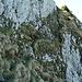 Beim Anstieg zum Plattenberg: das Grasband, das die Felswand unterhalb des Gipfels überwindet.