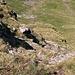Blick vom Grat hinunter nach Südwesten, es geht praktisch senkrecht hinunter, das Foto bringt die Steilheit nicht richtig zum ausdruck, wie meistens.