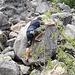 Stefan an einem kleineren Boulder. Aber auch die können gemein sein.