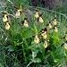 im Naturschutzgebiet und Orchideenparadies