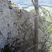 Danach folgt eine kurze Fussstrecke mit einem Wändli, man klettert direkt im 3. Grad nebem Baum hoch zum Stand der nächsten Seillänge.