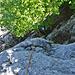 Tiefblick am Pfaffengilet (5b) - oben angekommen sahen wir, dass diese Wand wenig oberhalb im 2.Schwierigkeitsgrad umgangen werden kann, somit wäre der gesamte Eulengrat mit Tourenschuhen kletterbar (Zwingend 5a).