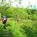 Dopo essere passati di fianco alla chiesetta di Olmo, il sentiero si porta a monte delle case e supera alcuni prati prima di entrare nel bosco di radi ontani, per poi proseguire in un esteso lariceto che ci accompagnerà fino all'Alpe Lendine.