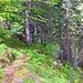 Die Traverse nördlich unter dem Chnebelhorn durch.