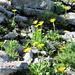 hübsche gelbe Blumen...