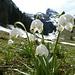 ... mit alpinem Hintergrund