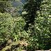 Vom Fels haben wir einen schönen Blick durch die Bäume runter ins östlich benachbarte Schwarzenbachtal.