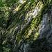 Der ist markiert und führt uns nun (weiterhin in nördliche Richtung) durch eine abwechslungsreiche Waldpassage ...
