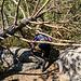 Den Baum-Limbo tanzend geht es weiter zum nächsten Fels.