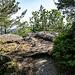 Alle Granitblöcke vereint, dass sie mit schön knorriger Vegetation bewachsen sind ...