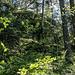 Zwischen den Aussichtsfelsen geht es auf einem rustikalen Pfad durch beschauliche Waldpassagen wie diese. Hier versteckt sich oberhalb eine weitere schöne Granitwand, die wohl gut kraxelbar wäre.