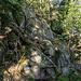 Erneut kommen wir an größeren, im Wald verstreut liegenden Granitblöcken vorbei.