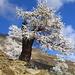 ein Eisbaum