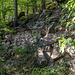 Der weitere Weg führt erneut auf einem schmalen Pfädchen zurück bis zum Wanderparkplatz, optional kann man parallel unterhalb auch den Forstweg benutzen. Was wir anfangs auch versehentlich tun, aber da der restliche Rückweg sich nun doch etwas zieht, wechseln wir nochmal zum Pfad hoch. <br />Ich meine, auf diesem Bild sehen wir ausnahmsweise mal keinen Granit, sondern Buntsandstein.