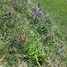 Artenreiche Trockenwiese