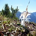 Gipfelfederschmuck auf einem der unbenannten Hochpunkte des Schattenberggrates