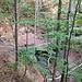 Abstieg durch die Hüttenwaldschlucht