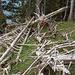"""Überreste von """"Opfern"""" der Baummonster"""