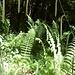 """Eine wahre Grünpflanzen-""""Küche"""""""