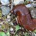 Kaum am Ellenfurter Tobel angekommen, wechselt Flora und Fauna