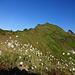 Rückblick auf den Sisiger Spitz - so ein richtiger Voralpen-Gipfel