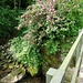 Omaggio floreale del fiume