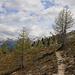Auf etwa 2300m standen nur noch einzelene Bäume in der tundraähnlichen Landschaft. Der Vegetationsgürtel mit dem kargen Unterwuchs noch schöner als der tiefer liegende dichte Bergwald.