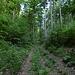 steiler Waldaufstieg (Täuferstig)