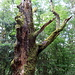Baumfragment an der Steinhalde