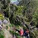 Eine Steilstufe im lichteren, grasigen Wald ist mit entsprechndem Ogaschmo schnell überwunden.