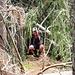 Spannend war vor allem eine Stelle, an der man zuerst unter einem Baumstamm hindurchkriechen musste....