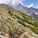 Wunderschöner Abstieg zum Gängele, am Südgrat / Westflanke des Entschenkopf.