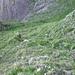 Gras am Ende Westkamin Gamsberg. Sieht nicht so steil aus, ...